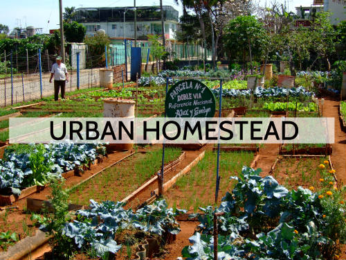 Understanding what is urban homestead.